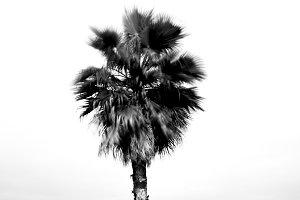 Palm tree garden in mediterranean
