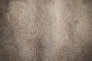 Skin of a rhinoceros.