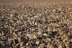 the soil in the field