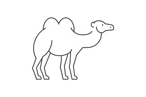 camel vector line icon, sign, illustration on background, editable strokes