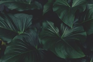 Dark and Moody Tropical Leaves