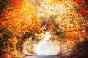 Arch of autumn trees