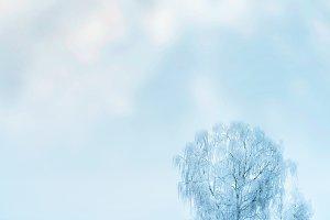 Winter frozen tree landscape