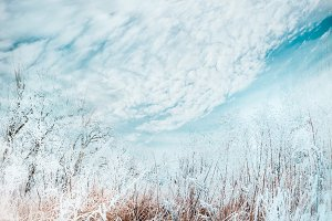 Snow covered grasses, winter nature