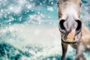 Funny horse face at winter with snow