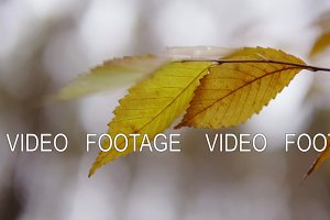 cinematic shot, slow motion. yellow leaves in an autumn forest. the first snow in a year.