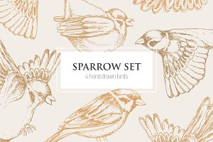 Set, seamless pattern with sparrows