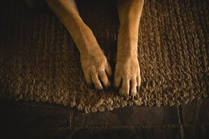 Low section of dog relaxing on doormat