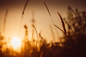 grass and field on sunset background