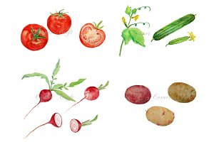 Watercolor Vegetable Collection 2