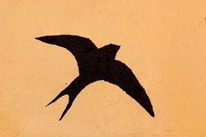 Silhouettes of birds painted