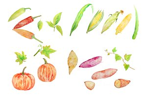 Watercolor Vegetable Collection 4