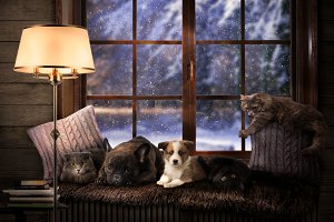 Many Pets on a cozy windowsill. Outside, the winter snow. Dog and cat lie together. Shining lamp, evening