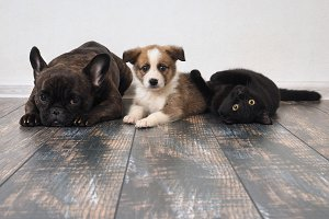 Adult dog, puppy and cat