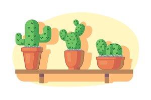Cacti on wooden shelf