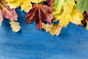 Yellow leaves autumn background