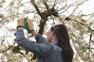 Woman examining a tree