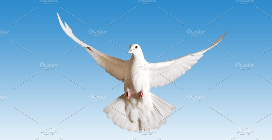 White Pigeon Symbol Of The Peace Flies On The Blue Sky Abstract