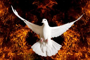 white dove as a symbol of hope departs from the flame
