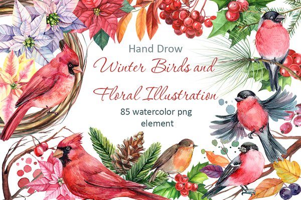 Winter birds and Floral illustratio…