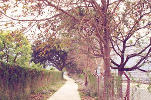 Way to the garden in autumn season