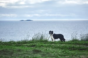 dog on the sea background