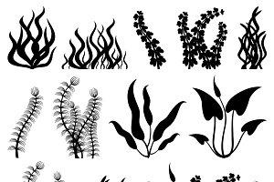Aquarium seaweed vector set