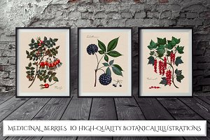 Botanical Illustrations. Berries