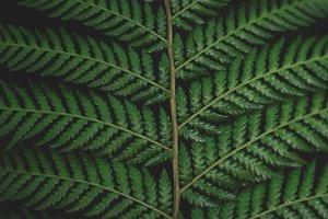 Forest Fern Patterns