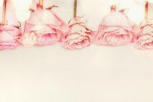 Pastel pink roses border