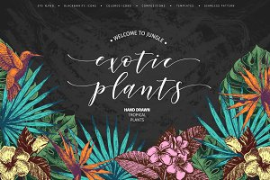 Hand drawn Tropical Plants