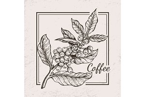 Coffee Berries Twig Icon Vector Illustration