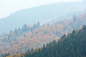 Autumn Carpathians (Ukraine).