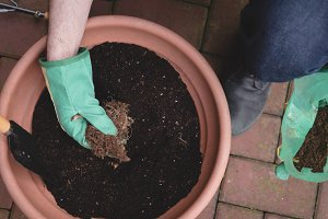 Man potting a plant in the garden