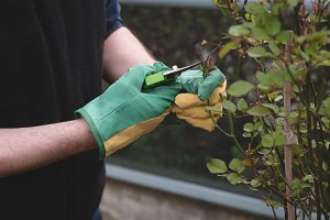 Man cutting the stems of plant in the garden