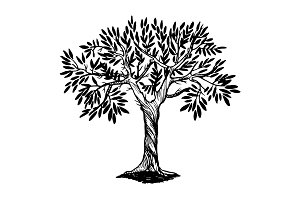 Olive tree engraving vector illustration