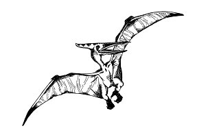pterodactyl engraving vector illustration