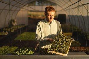 Man holding fresh leafy vegetable