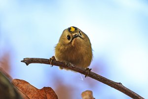 fluffy forest bird with cute muzzle