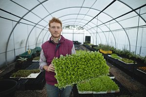 Man holding fresh leafy vegetable in greenhouse