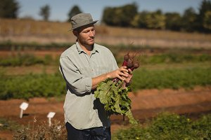 Farmer harvesting beetroot in field