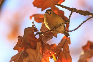 autumn picture with orange leaves and singing bird
