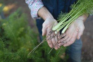Farmer holding fresh vegetables in the farm