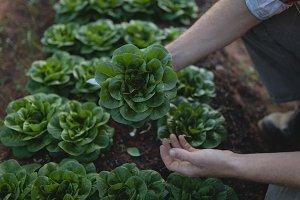 Farmer holding a plant in the farm