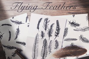 Flying feathers and seamless pattern