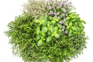 Fresh herbs white background
