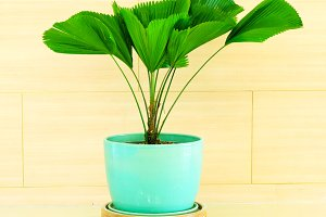 Green plant in blue vase decorated