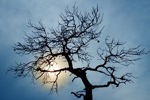 silhouette of bare tree on sky