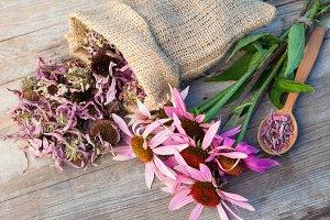 Healing coneflowers