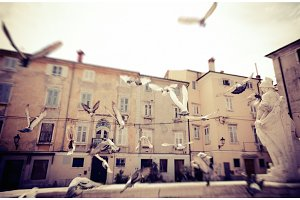 Flock Of Pgeons Flying In Piran, Slovenia